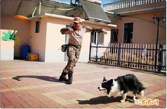 宠物训练学校图片2