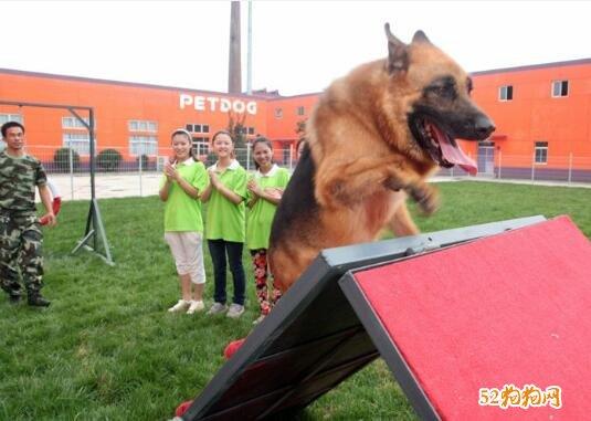 宠物训练学校图片3