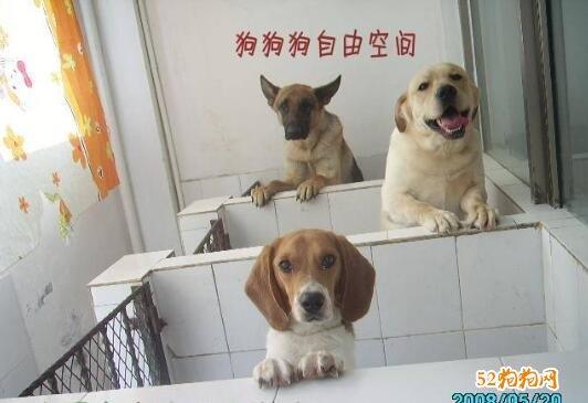宠物训练学校图片4