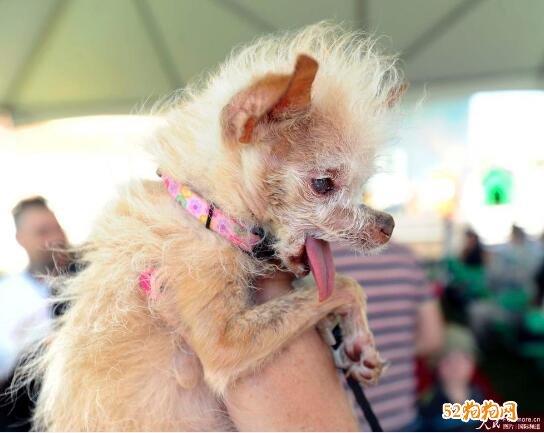 最丑的狗图片2