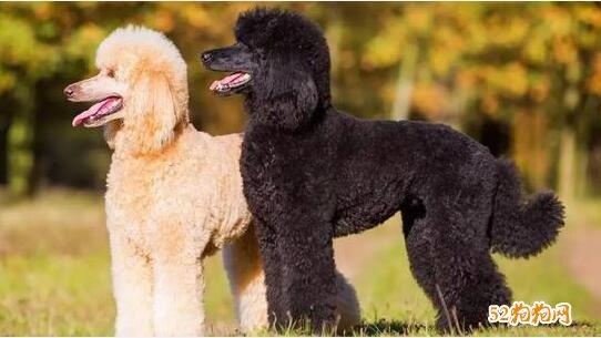 狗的种类及图片大全3