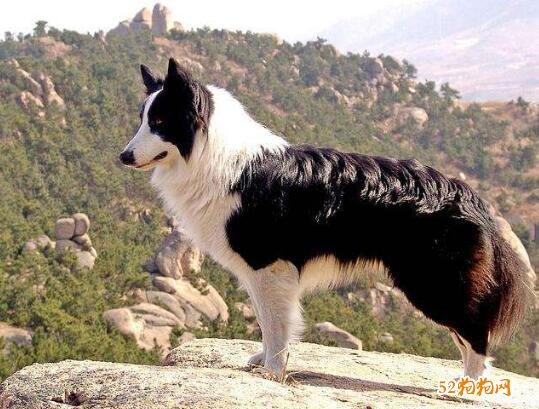 狗的种类及图片大全5