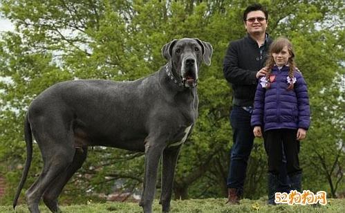 狗的种类及图片大全13