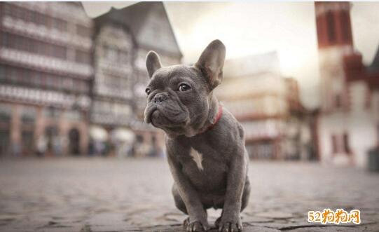 狗的种类及图片大全15