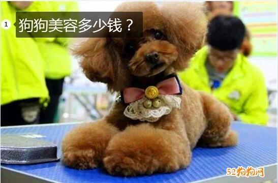 狗狗美容多少钱图片