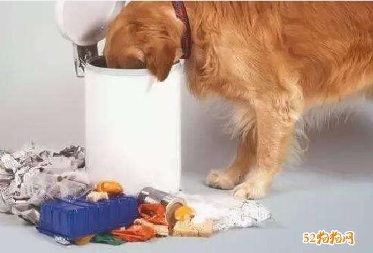 狗狗为什么会吐图片