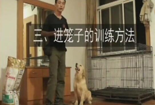 训练狗的视频、狗狗住笼子的好处及训练方法
