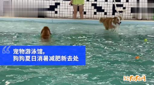 宠物经济时代大爆发!上海一家狗狗游泳馆生意火爆!