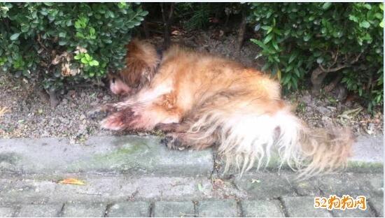 上海对遗弃宠物狗主人罚500元图片