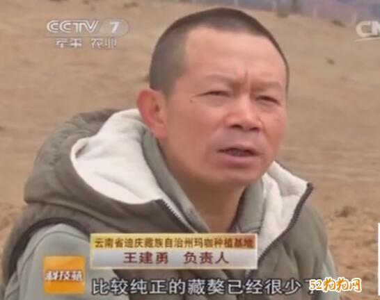 藏獒视频截图
