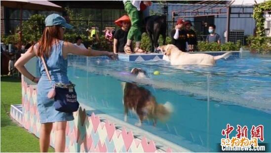 上海高温炎热!宠物乐园的狗狗游泳生意火爆!
