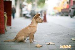 上海养犬管理条例:遗弃