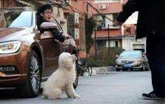 宠物狗被车撞死!主人聚