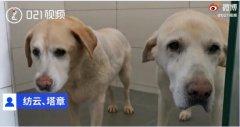 上海退役4年导盲犬苦等领