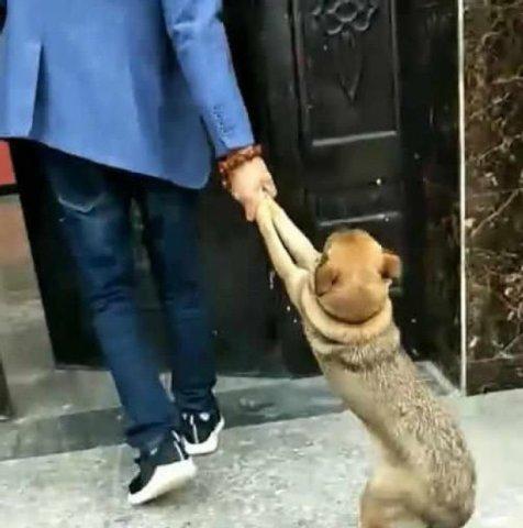 贪玩宠物狗不回家,每天都是被主人拖回家!