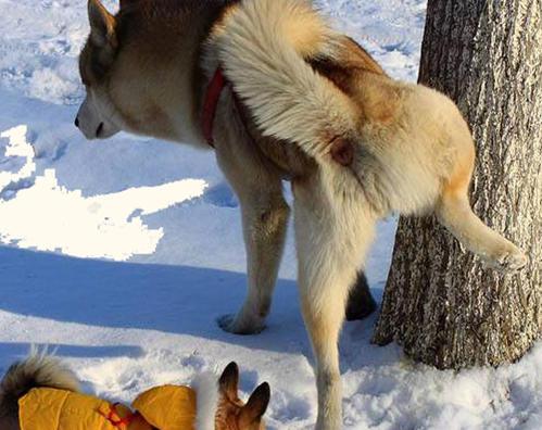怎么训练小狗大小便