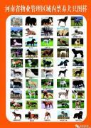 鹤壁养犬法规出台:城区