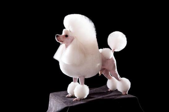 湖南宠物美容、湖南宠物美容师培训学校