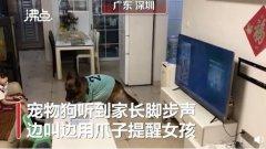 宠物狗帮女孩监听望风家