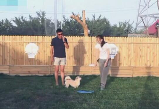 视频教狗:狗狗上垫子训练视频教程!