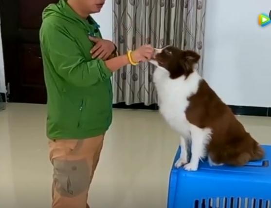 怎么训练狗狗的视频?拒食训练教程!