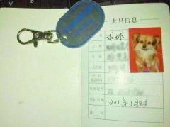宠物狗电子身份证将普及
