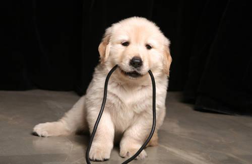小狗呕吐白色泡沫怎么办?