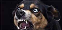 狂犬病治疗世界难题已解