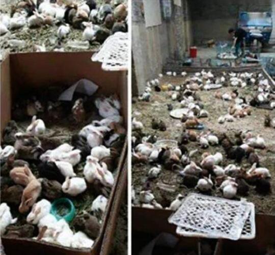 韵达回应数千只宠物滞留物流园死亡怎么回事?