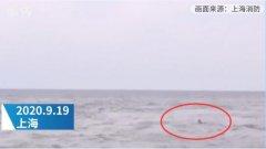上海一男子为救宠物狗跳