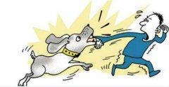 """治理恶犬伤人 """"管狗""""是"""