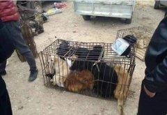 肉狗商贩生意火热,狗贩