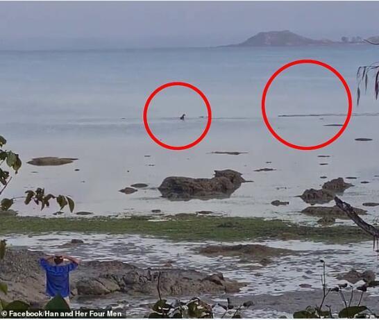 澳洲宠物狗在海中玩耍被鳄鱼盯上!