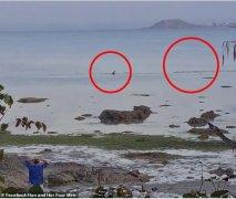 惊险!澳洲宠物狗在海中