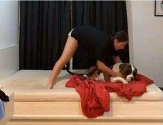 世界上最懒的狗!女子帮