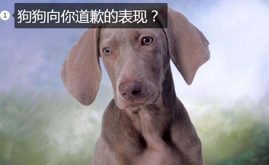 狗狗向你道歉的表现图1
