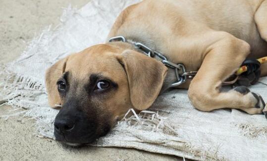 狗狗向你道歉的表现图3