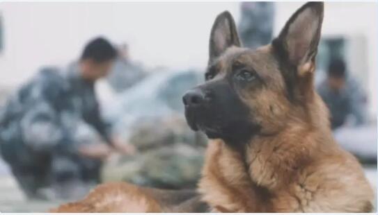 """狗狗当上了""""空降兵""""图3"""