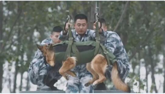 """狗狗当上了""""空降兵""""图4"""