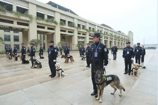 公安搜爆犬作业能力认证及实战比武现场图1