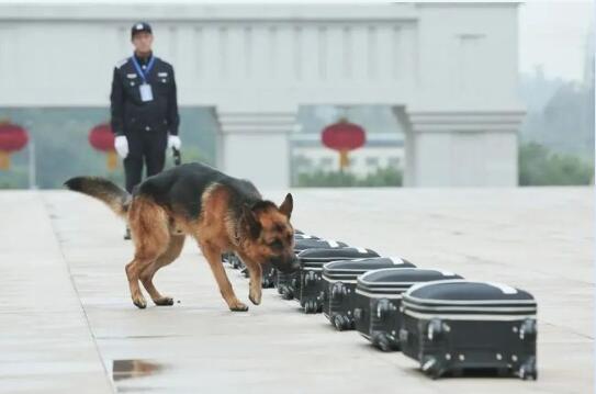 重庆公安搜爆犬作业能力认证及实战比武现场图3