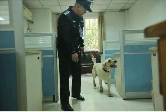 重庆公安搜爆犬作业能力认证及实战比武现场图
