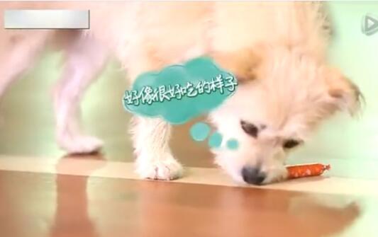 小狗训练视频、怎么训练狗狗捡东西?