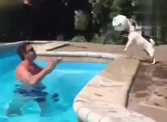 狗搞笑视频视频、小狗狗失误搞笑视频集锦
