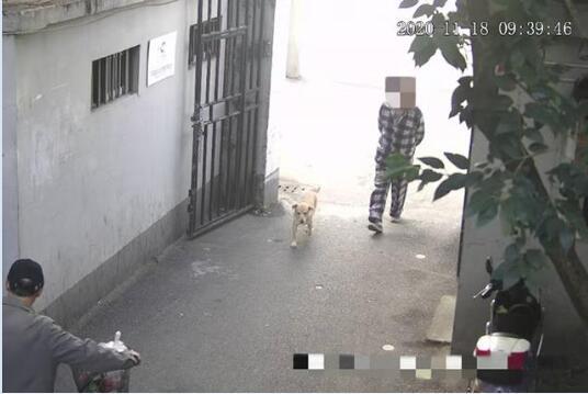 """上海警方试点用抓拍系统规范""""遛狗不牵绳""""!规范文明养犬行为搭建了科技的围栏!"""
