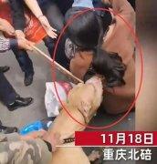 重庆女子宠物狗被咬主动营救被猛犬反扑!比特犬越打越凶不松口!