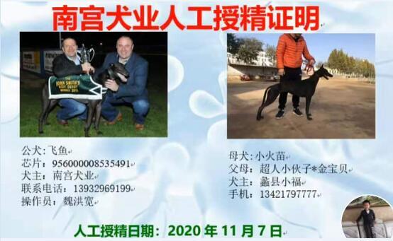 2021年血统格力犬出售图1
