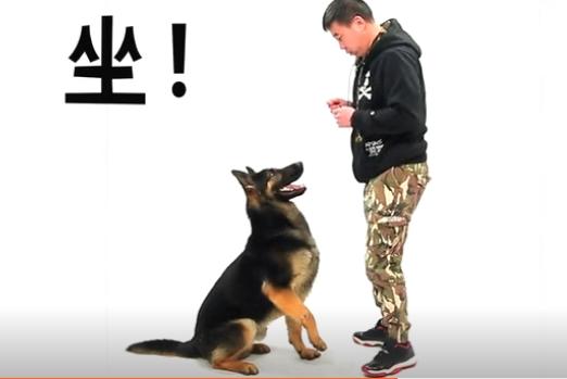 训练狗狗握手步骤图1