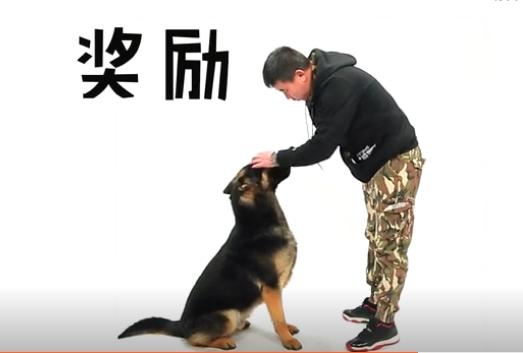 训练狗狗握手步骤图5
