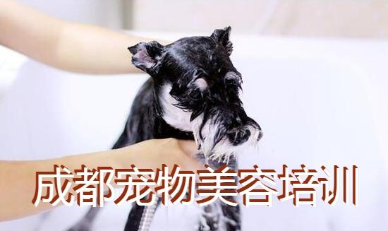 成都宠物美容培训